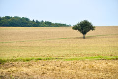 Campagna di agricoltura della strada asfaltata Fotografie Stock