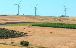 Campagna di agricoltura di estate della Sicilia, Italia Fotografia Stock Libera da Diritti