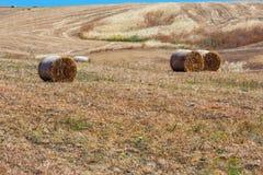 Campagna di agricoltura di estate della Sicilia, Italia Immagini Stock Libere da Diritti