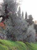 Campagna di autunno con di olivo La Toscana, Italia Fotografia Stock