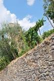 Campagna di Chianti nella provincia di Siena immagine stock