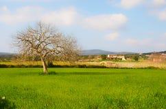 Campagna, Mallorca Fotografia Stock