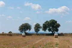Campagna polacca, campi raccolti, mucchi di fieno Fotografie Stock Libere da Diritti