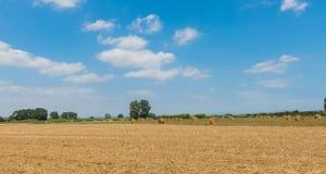 Campagna polacca, campi raccolti, mucchi di fieno Fotografia Stock Libera da Diritti