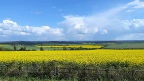 Campagna Regno Unito del Wiltshire del giacimento del seme di ravizzone Fotografia Stock