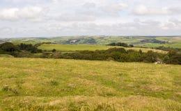 Campagna Regno Unito di Dorset Fotografia Stock