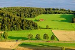 Campagna verde di estate dal tramonto Immagini Stock