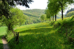 Campagna verde scenica Fotografia Stock Libera da Diritti