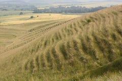 Campagna vicino a Calne. Il Wiltshire. Il Regno Unito Fotografie Stock Libere da Diritti