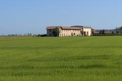 Campagna vicino a Vercelli, Italia, ad estate fotografia stock
