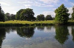 Campagne anglaise, vaches et un fleuve Photos libres de droits