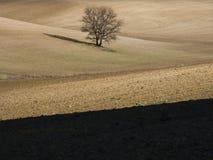 Campagne avec l'arbre Photo stock