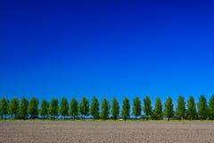 Campagne avec les arbres, la prise de masse et le ciel Photographie stock