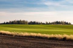 Campagne d'automne avec le champ, le pâturage, la forêt et le ciel bleu photographie stock libre de droits