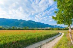 Campagne d'Italien de cuvette de chemin de terre Photographie stock libre de droits