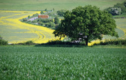 Campagne de Bedfordshire Image libre de droits