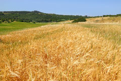 Agriculture pastorale Photos stock