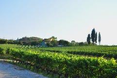 Campagne de chianti de ferme et de vignes photographie stock libre de droits