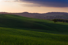Campagne de la Toscane Image stock