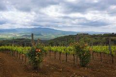 Campagne de la Toscane Images libres de droits