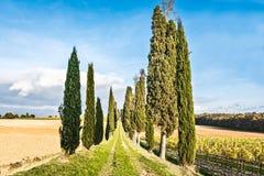 Campagne de Lucignano Photos stock