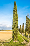 Campagne de Lucignano en Toscane Image stock