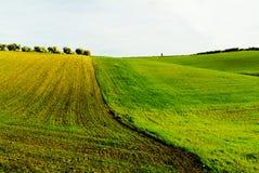 Campagne de semailles de blé Photo stock
