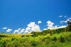 Campagne de Sunny Hawaiian Photos libres de droits