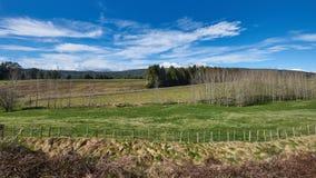 Campagne idyllique au Nouvelle-Zélande Photo libre de droits