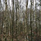 Campagne noire blanche d'hiver blanc d'arbres de forêt Image libre de droits