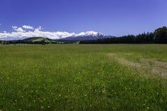 Campagne Ohakune du Nouvelle-Zélande photographie stock