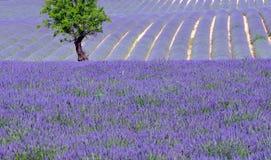 Campagne scénique en Provence Images stock