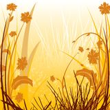 Campagne Sunlit florale Photographie stock
