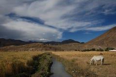 Campagne tibétaine Photographie stock libre de droits