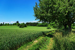 Campaign path and Cereal crop Stock Photos