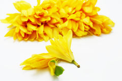 Campaka ylang ylang Stock Photos