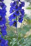 Campana azul Imagenes de archivo