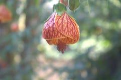 Campana de la flor Fotografía de archivo