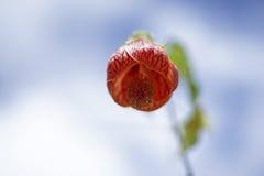 Campana del fiore Immagine Stock