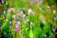 Campana-flor Foto de archivo libre de regalías