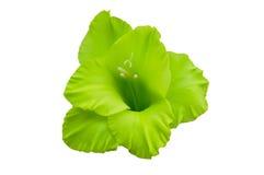 Campana-flor verde Foto de archivo libre de regalías