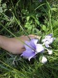 Campana grande de la lila Foto del verano imagenes de archivo
