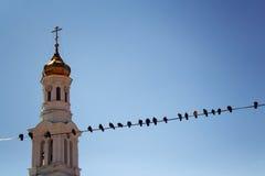 Campanario de la iglesia con las palomas en el primero plano y el cielo azul Imagenes de archivo