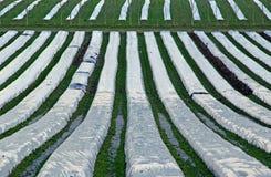 Campane di vetro dei polytunnels dell'azienda agricola Immagini Stock Libere da Diritti