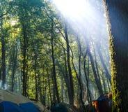 Campant dans la forêt en montagnes carpathiennes, l'Ukraine Photo libre de droits