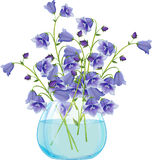 Campanula bell flowers in glass vase. Stock Photo