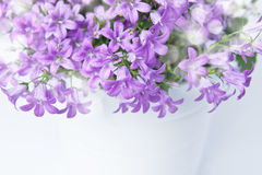 Campanula bell flowers Stock Images
