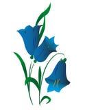 Campanula, flor Imágenes de archivo libres de regalías