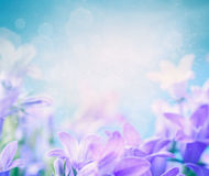 Campanula floral background Stock Photos