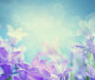 Campanula floral background Royalty Free Stock Photo